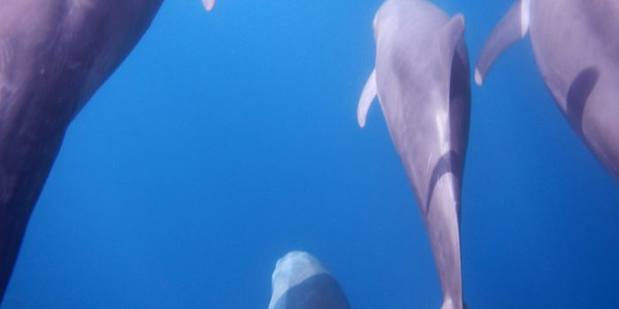 Dolphins Sea of Cortez