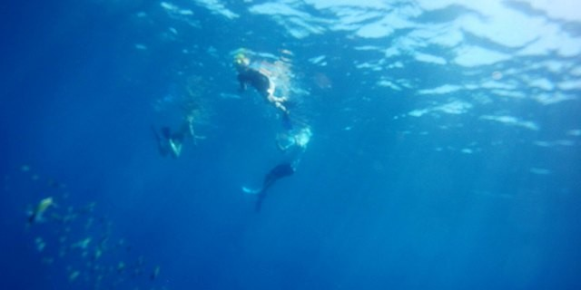 Coronado Island Tour Sea and Land Eco-tours