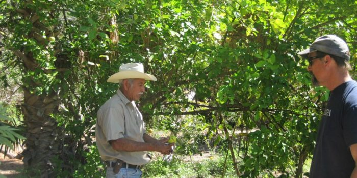 Oasis and Orchards San Javier Tour Loreto Baja