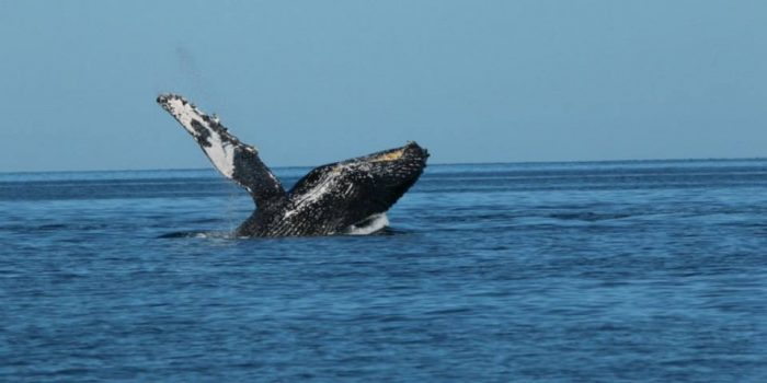 whale-watching-sea-and-land-tours-loreto-BCS