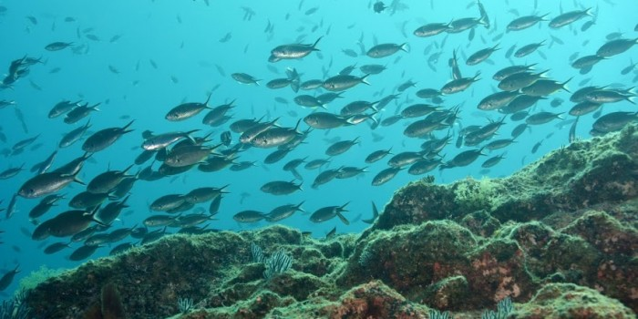 Over 20 local dive sites in the Loreto National Marine Park
