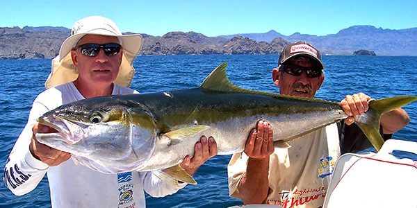 Yellowtail Sport Fishing